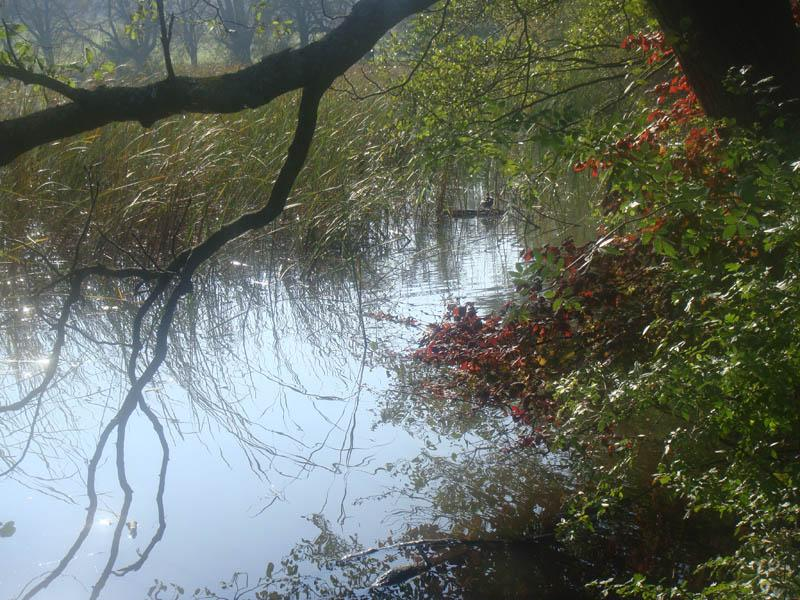 Lainzer Tiergarten Wandern im Lainzer Tiergarten