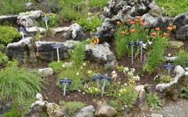 Alpenblumengarten Kitzbüheler Horn